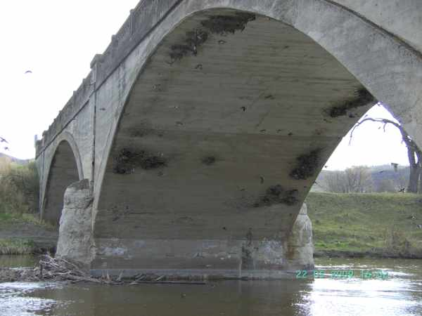 Swallow Nests under Millwood Bridge